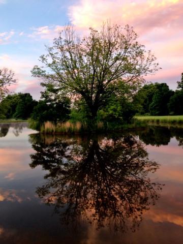 water tree-360